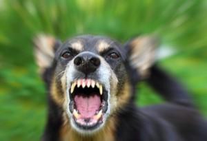 dog-growling
