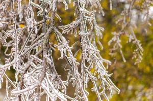 TX_Icestorm_1