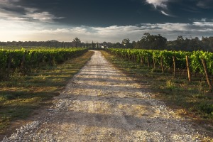 vineyard path